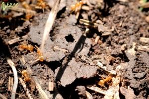 tema-mravenci-predskolaci_13
