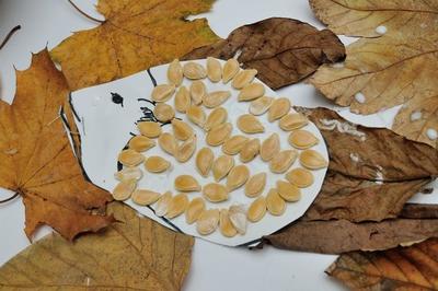 Ježek z dýňových semíkek v listí